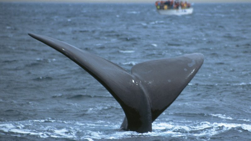 Puerto Madryn – Whale Watching