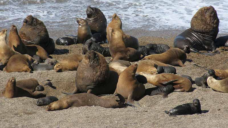 Puerto Madryn – Sea Lions