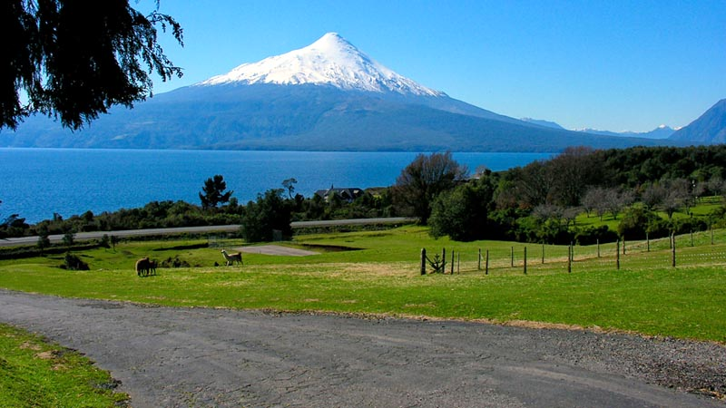 Puerto Varas – The Woods