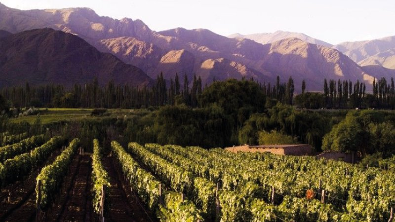 Cafayate – Wineries
