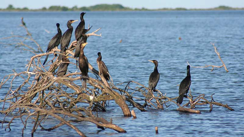Esteros del Iberá – Bird Colony